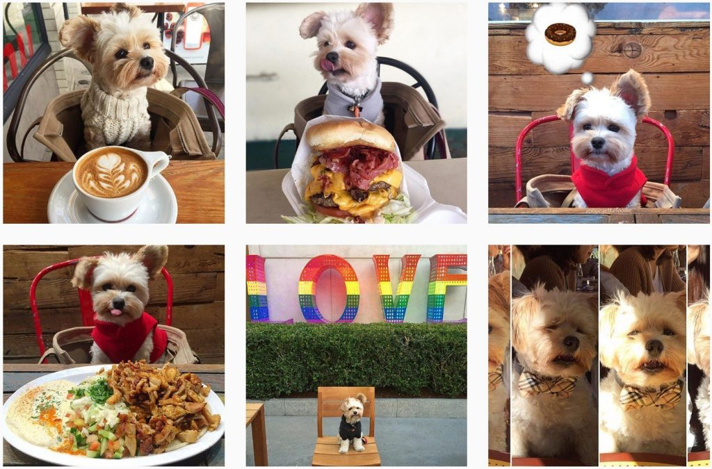 instagram puppy foodie